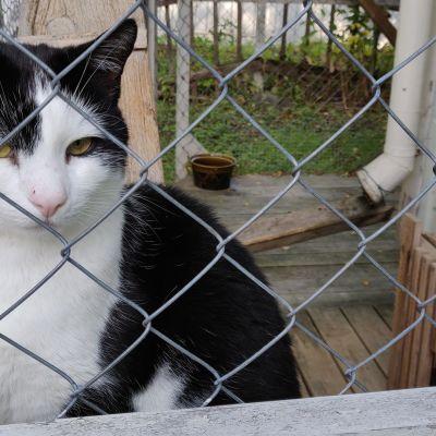 Valkomusta kissa häkissä.
