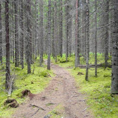 Luontopolku metsässä