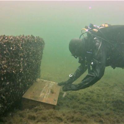 Sukeltaja nostaa arkku merenpohjasta.