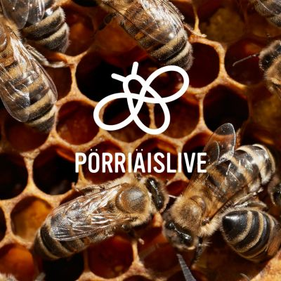 Nu ska vi rädda pollinerarna.