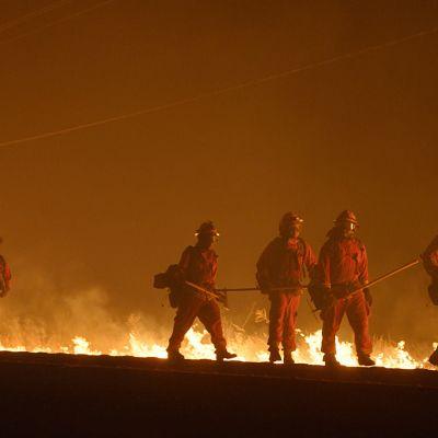 Ennennäkemättömän laajat metsäpalot ovat vallanneet uutisotsikot ympäri maailman.