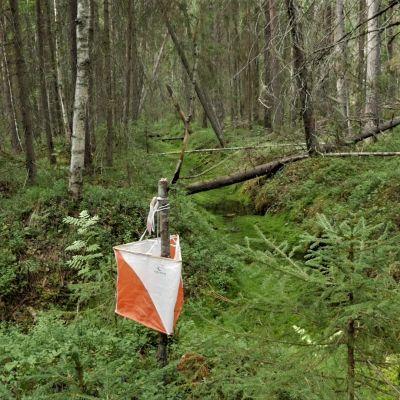 Suunnistusrasti metsässä.