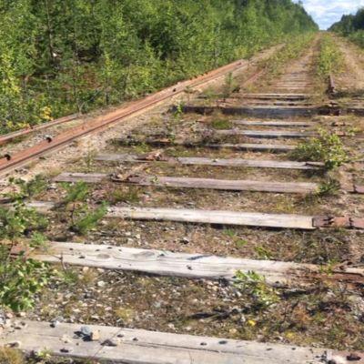 Kemijärvi-Salla -rataosuus on metsittymässä.