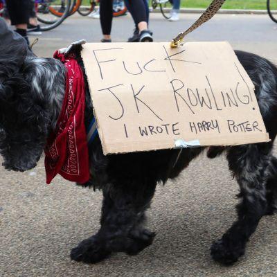 Koira mielenosoittaa JK Rowlingia vastaan