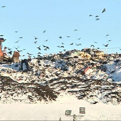 Puskutraktori jätevuoren päällä