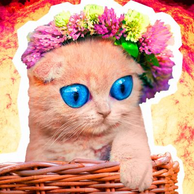 Epäilyttävän söpö kissa