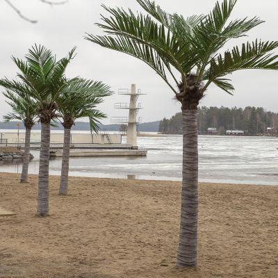 Palmuja Kallaveden rannalla