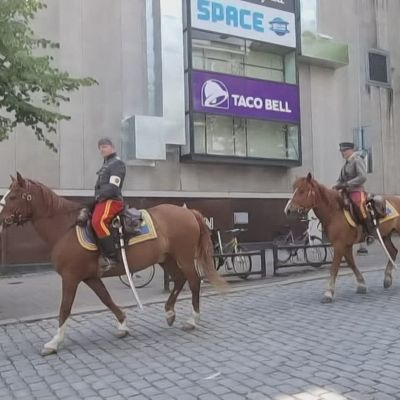 Pimu ja Hobi ovat suomenhevosia, joiden kesätyö on kantaa univormupukuisia sotilaita ja vanhaa perinnettä