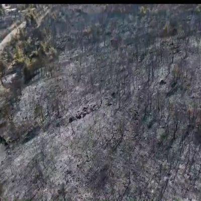 Palanutta metsää Malakasassa Kreikassa