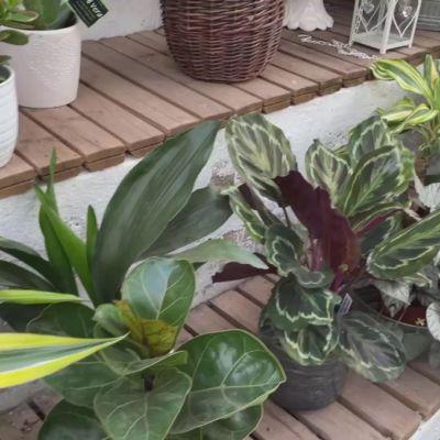 Viherkasvit jatkavat suosiotaan, näillä vinkeillä kasvi pärjää talven yli