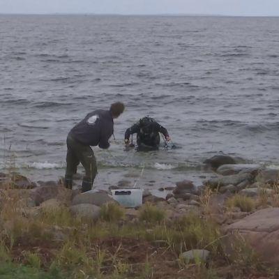 Tutkijat kartoittavat Ahvenanmaan meriluontoa