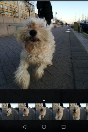 Juokseva koira sarjakuvattuna.
