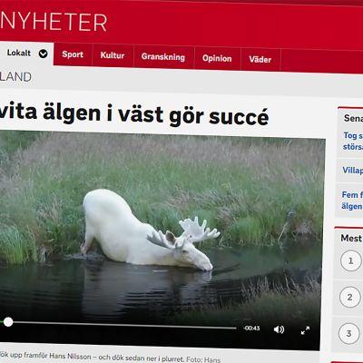 Kuvakaappaus SVT:n verkkosivuilta.