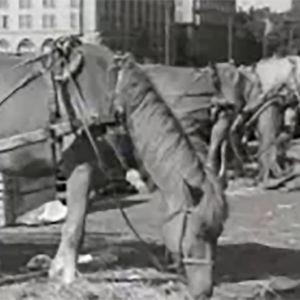 Hevosia kauppatorilla