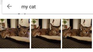 Katter i Googles bilddatabas.