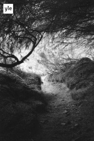 En svartvit bild från skogen