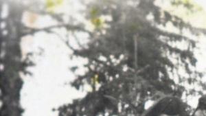 Annin arkku hautajaisissa