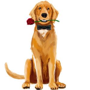 Kultainen noutaja ruusu hampaissaan, maalaus