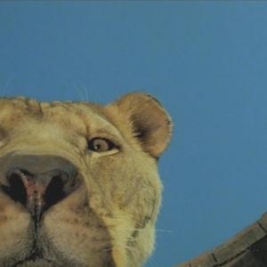 Roar-elokuva