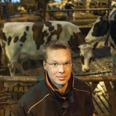 Maatalousyrittäjä lehmien vierellä.