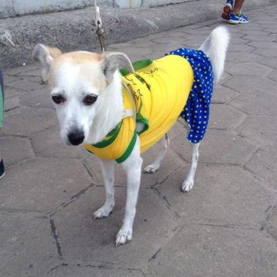 Hunden hejar på Brasilien.
