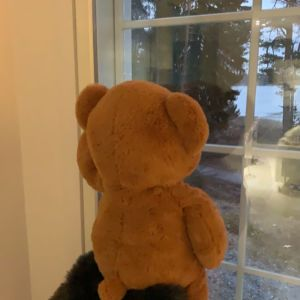 En nalle i fönstret i Tennäs i Pargas.