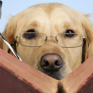 En hund med glasögon som läser en bok. Gångstavar skymtar också fram bakom boken.