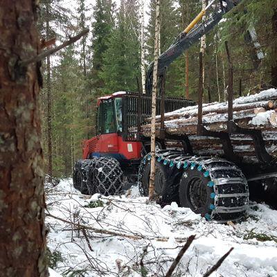 Ajokone vie puuta metsästä