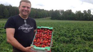 Jordgubbsodlare Kalle Åberg med jordgubbar