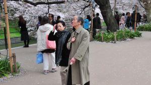 Ett äldre par promenerar förbi blommande körsbärsträd i Tokyo