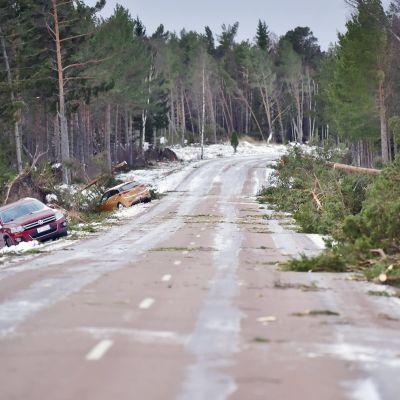 Två bilar i diket på sidan om en väg, stormskadade träd ligger ett virrvar på andra sidan vägen