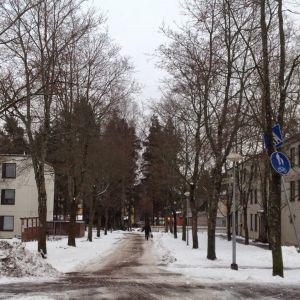 Träd allé i vårberga