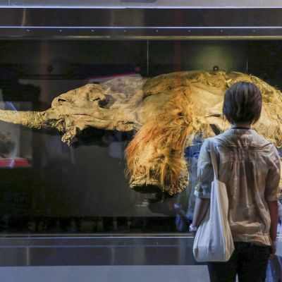 Yuka:ksi nimetty mammutti näyttelyssä Jokohamassa Japanissa.