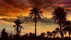 Solnedgång i Karbala i Irak.