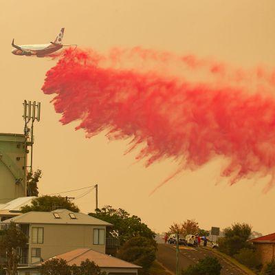 Sammutuslentokone pudotti punaista, paloa hidastavaa nestettä maastopalon ylle Harringtonin kaupungissa Uudessa Etelä-Walesissa Australiassa.
