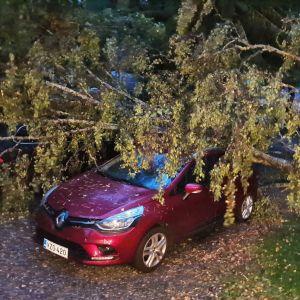 Träd som fallit över bil i stormen.