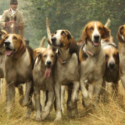 prisma: koira kumppanina, yle tv1