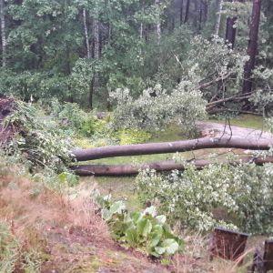 Träd som fallit i ovädret i Södra Haga, Helsingfors12.8.2017