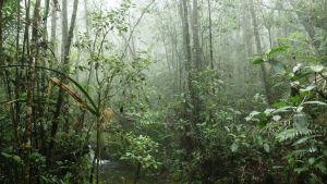 Sademetsässä kuhisee.