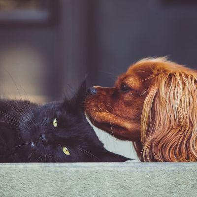 En katt och en hund ligger tillsammans på ett golv.