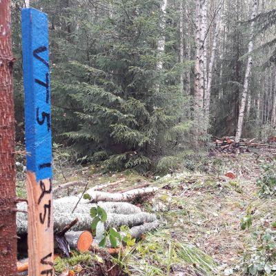 Sininen tielinjan merkki metsässä