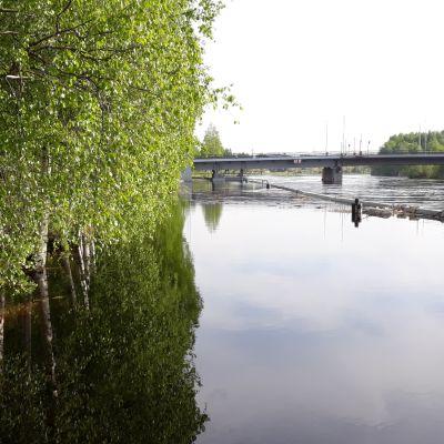 Pielisjoen pinta on korkealla keväällä 2018.