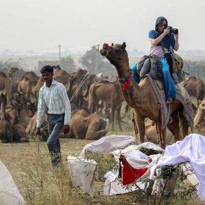 Turisti kamelisafarilla Pushkarissa, Rajasthanissa.