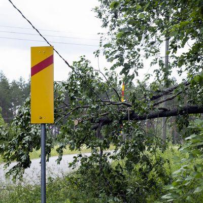 Sähkölinjan päälle kaatunut puu