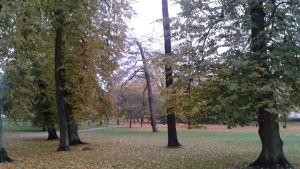 Park i Helsingfors 20.10.2014
