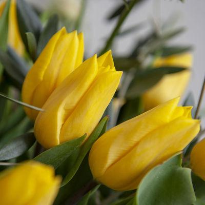 Keltaisia tulppaaneja.