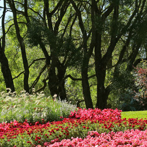 Elokuinen näkymä Hatanpään arboretumista Tampereelta, kukkia, puita