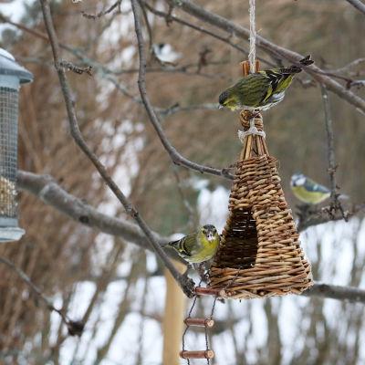 Lintujen talviruokintapaikka