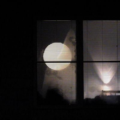 Valaistu ikkuna pimeässä. Pimeä. Ilta. Yö. Valoa ikkunassa.