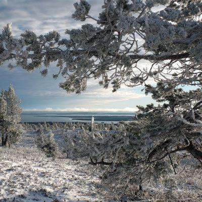 Luminen tunturimaisema